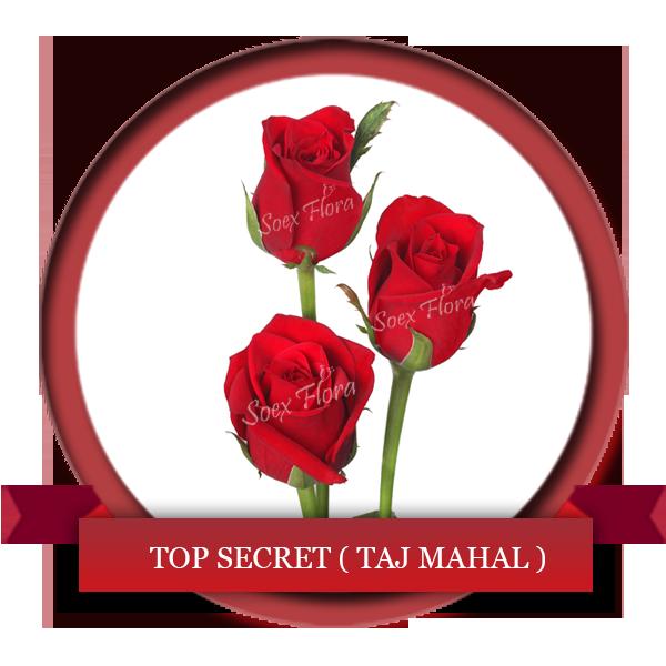 Taj Mahal Top Secret Rose Grower And Exporter In Malaysia